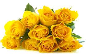 yellowrosesvalantinesday