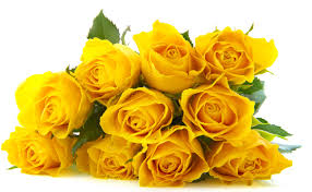 yellowrosesvalantinesday