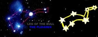 leg of the bull