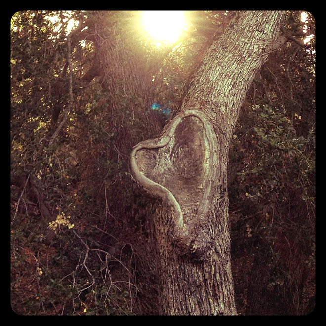 adventure-journal-hearts-in-nature-branch
