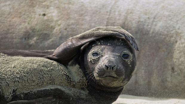 Seal attack2 6102015