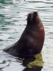 seal44thset21092015