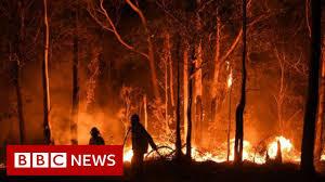 Image result for AUSTRALIA FIRES