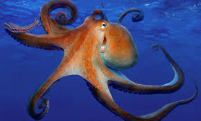 Octopus farming is 'unethical and a threat to the food chain' | Environment  | The Guardian